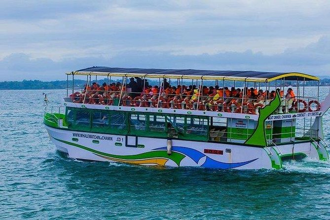 Whales & Dolphin Watching Day Tour From Induruwa