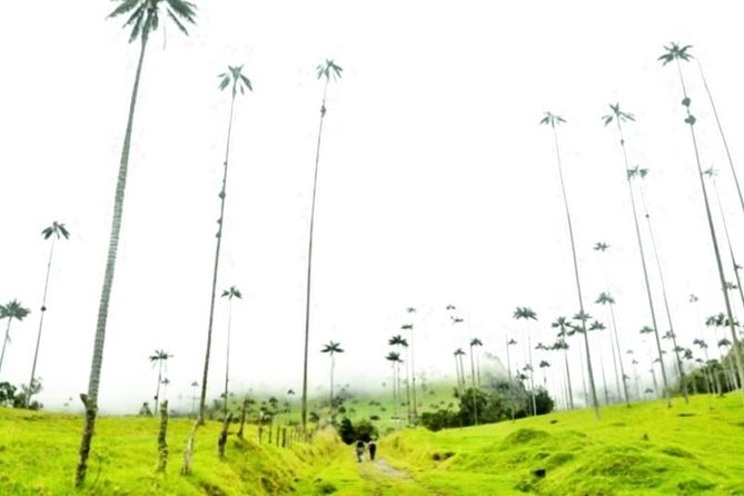 Cocora Valley Half Day Trip from Salento