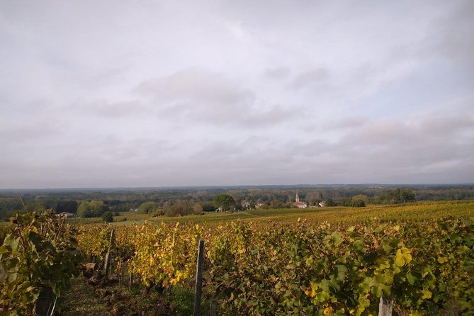 Private tour in the Sauternes wine region - discover Bordeaux sweet Crus Classés photo 6