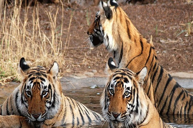 Panna National Park- Panna Tiger Reserve-land Of Tiger Panna-explore Panna Tiger