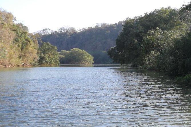 Mangrove Kayak