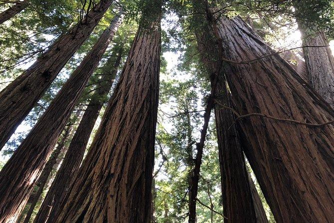 Muir Woods and Sausalito Half-Day Tour