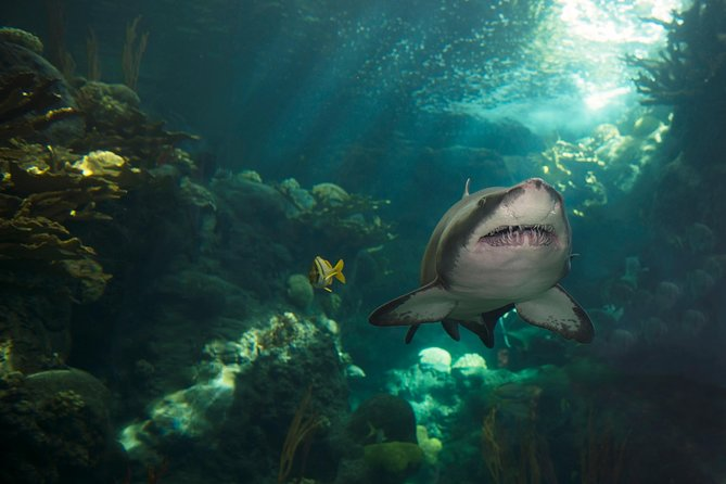 Sharks in 500,000 gallon Coral Reef habitat at at The Florida Aquarium in downtown Tampa, Florida