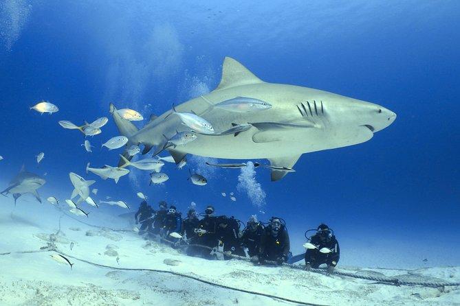Bull Shark Extreme - 1tank