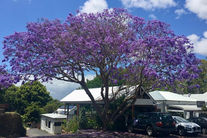 Byron Bay and Beyond Tour Including Cape Bryon Lighthouse Crystal Castle and Bangalow