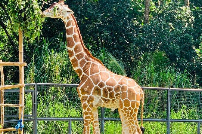 Cebu Safari Journeys