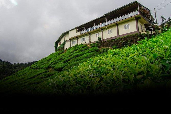 Tea Factory Tour at Elpitiya