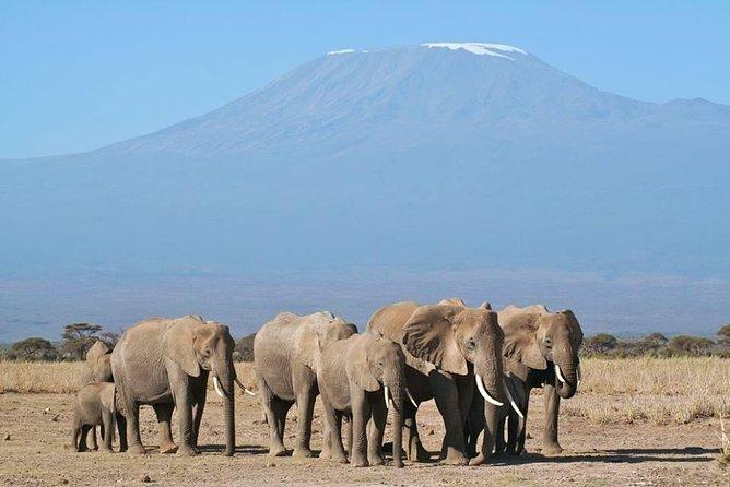 6 Day Amboseli, Lake Naivasha & Maasai Mara Safari