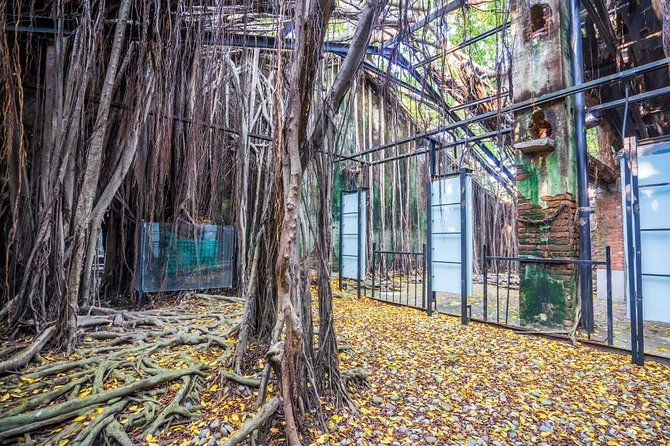 Explore the wild and natural phenomenon of the Anping Tree House
