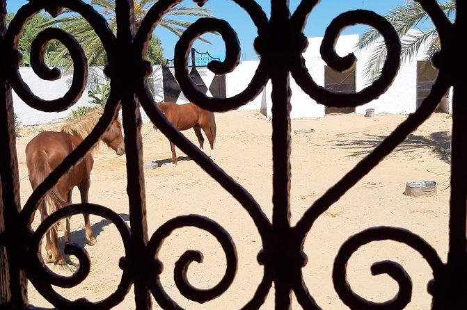 Equestrian rides
