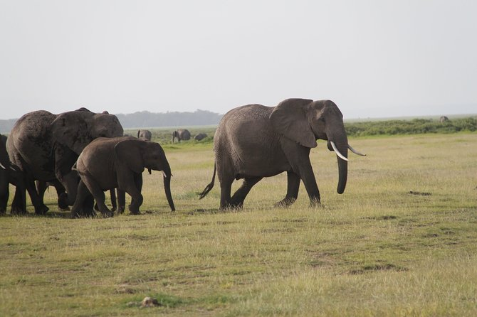 Amboseli National Park Guided Full Day Tour photo 10