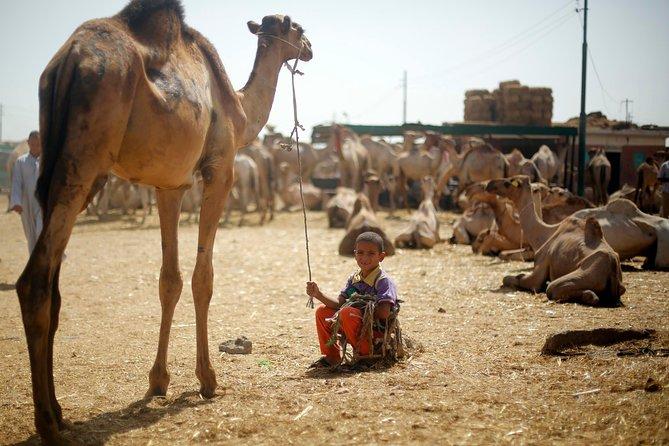 4 Hour Tour to Birqash Camel Market