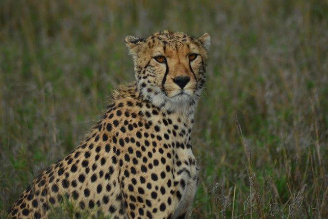 Best Honeymoon Safari in Tanzania..