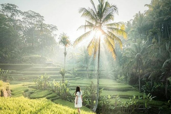 Ubud tour - popular spot - free wifi