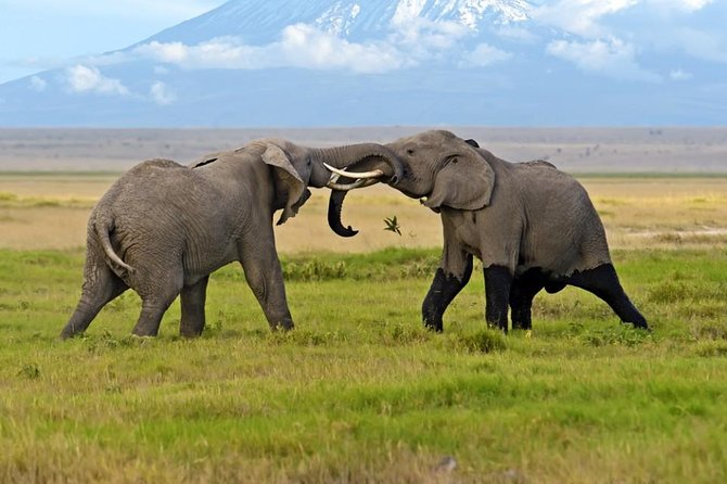 Amboseli National Park Guided Full Day Tour photo 8