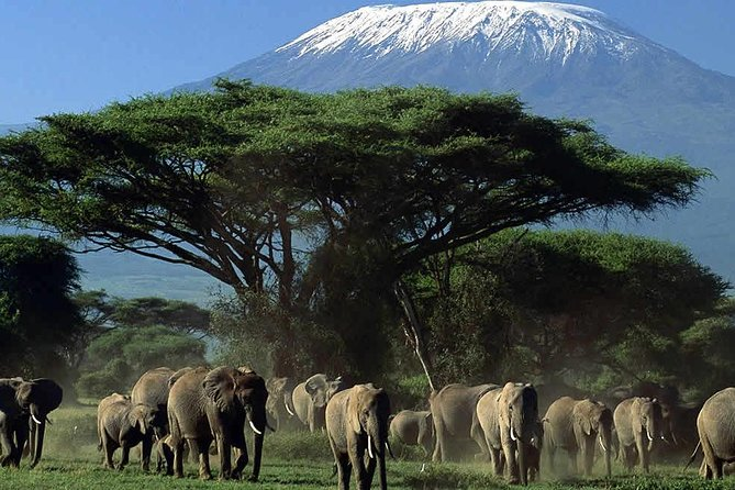 Amboseli National Park Guided Full Day Tour photo 9