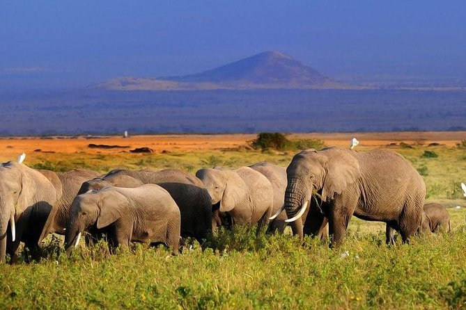 Amboseli National Park Guided Full Day Tour photo 6