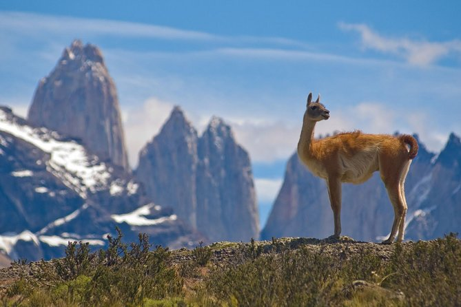 Full-Day Tour to the Torres del Paine National Park photo 15
