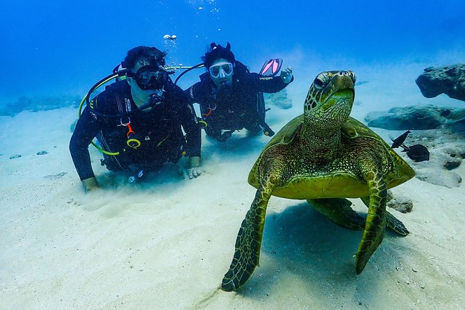 Waikiki Scuba Diving Experience with Turtles