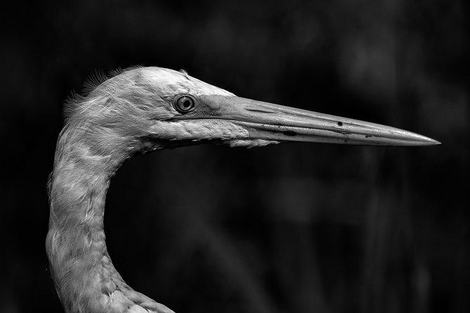 Private birdwatching tour in Pantanos de Villa (Villa Wetlands)