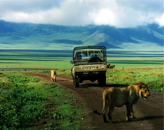 7 Day Mid-range Serengeti,Ngorongoro,Lake Manyara,Tarangire,Arusha National Park photo 23