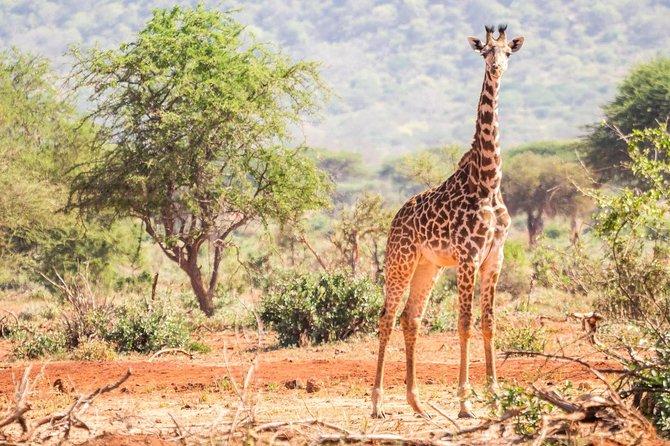 Affordable Short Tanzania Safari (2 Days Camping Safari)