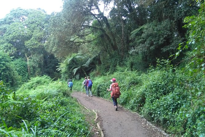 Full Day Hike At Rau Forest Reserve, Near Moshi