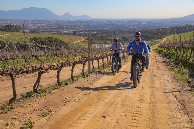 Cape Town: E-bike Wineland tour half-day
