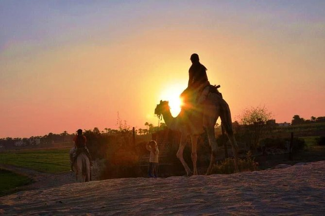 Camel Riding Tours Luxor