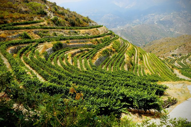 Sundays - Troodos Mountains Food & Wine Small Group Day Tour with Picnic Lunch