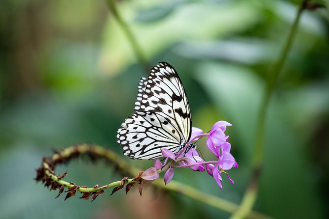 De Cockrell Butterfly Center-toegang in Houston