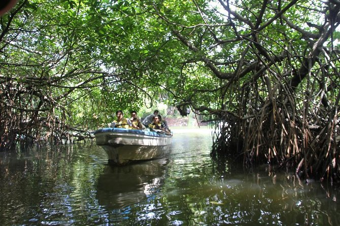 Dreamy boat safari through sun-kissed mangrove forests – Madu River