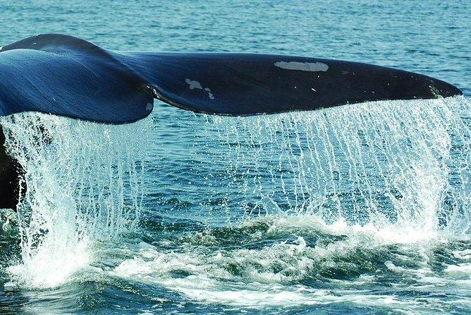 Samaná Whale Watching plus Cayo Levantado Bacardi Island