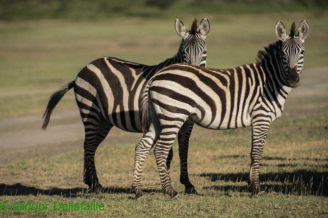 Migration safari Serengeti