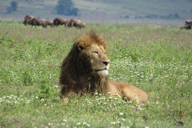1 Day Ngorongoro Crater Safaris