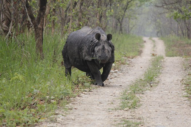 Jungle Towernight Stay In Chitwan National Park ,nepal-2 Nights 3 Days Package photo 15