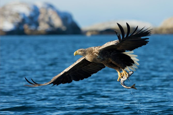 Fjord, Arctic Wildlife and Cultural Cruise