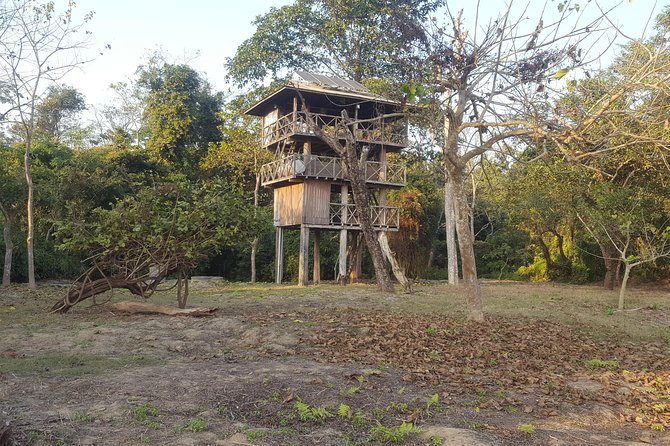 Jungle Towernight Stay In Chitwan National Park ,nepal-2 Nights 3 Days Package photo 11