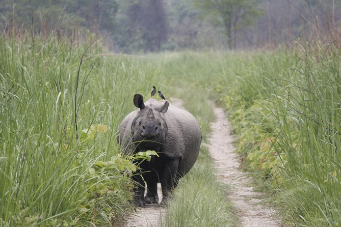 Jungle Towernight Stay In Chitwan National Park ,nepal-2 Nights 3 Days Package photo 2