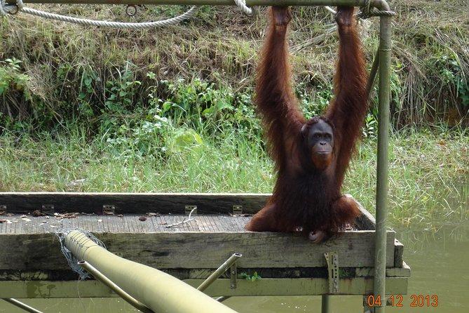 2D 1N Tour Cameron Highlands - Orangutan Island - Penang Island drop off