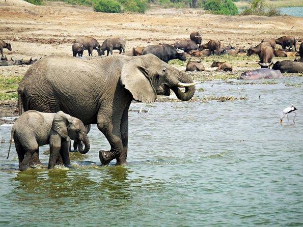 Queen Elizabeth National Park Safari - 3 DAYS