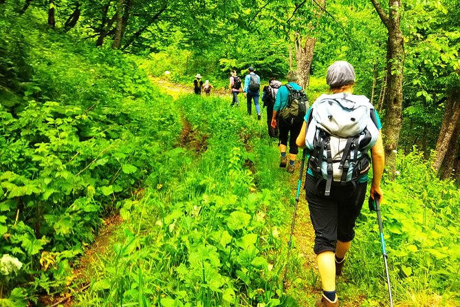 Relaxing hike in Dilijan National Park