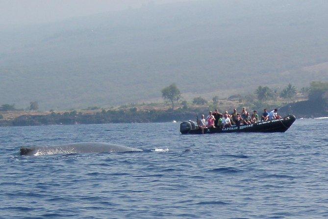 Zodiac Raft Whale Watching Adventure