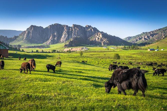 Horse riding to Terelj National park