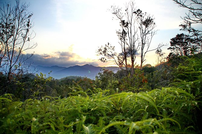 Lambir Hills Nature Excursion & Trekking