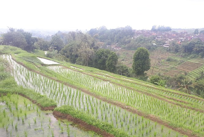 All INCLUSIVE-UNESCO Jati luwih n coffee plantations day trip