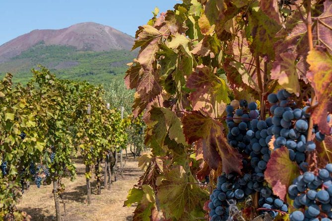 PRIVATE Mt VESUVIUS AND POMPEII - lunch and wine farm experience photo 7