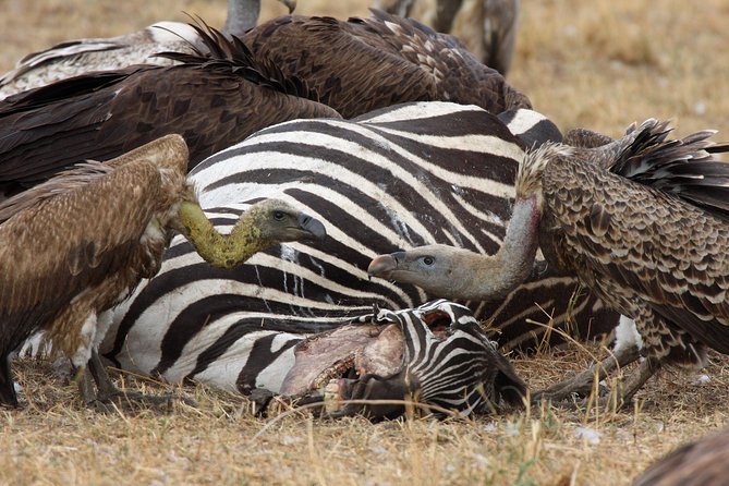 4 Day Serengeti and Ngorongoro crater