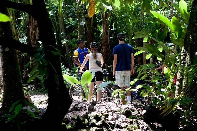 St Lucia Bike and Hike Half-Day Tour from the North Island photo 6