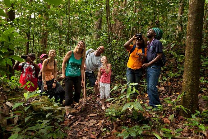 St Lucia Rainforest Walk